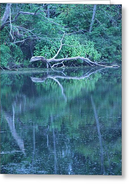 Reflection In Water Greeting Cards - Forest Reflection Greeting Card by Dan Sproul