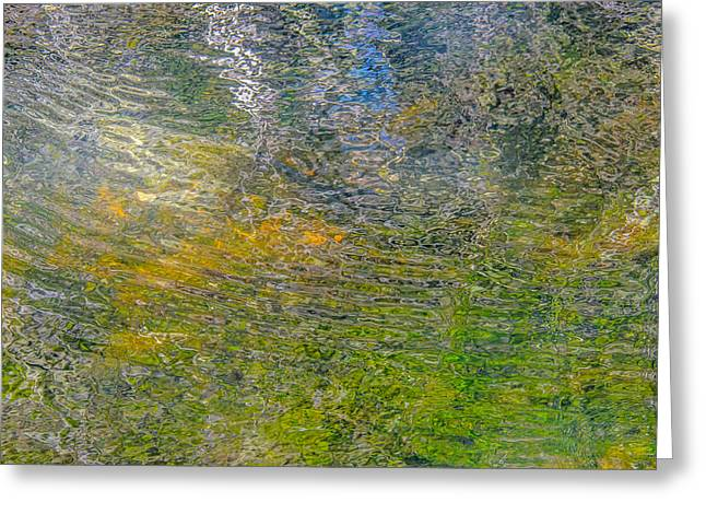 Trees Reflecting In Creek Greeting Cards - Forest Reflection Greeting Card by Roxy Hurtubise