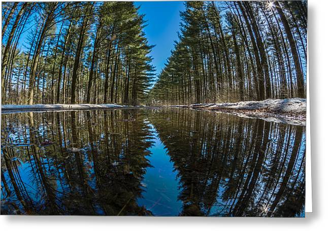Kettle Moraine Greeting Cards - Forest Reflections Greeting Card by Randy Scherkenbach