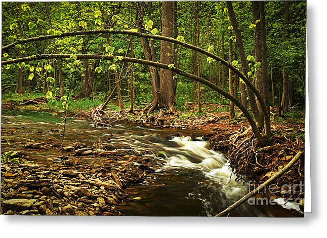 Flowing Greeting Cards - Forest river Greeting Card by Elena Elisseeva