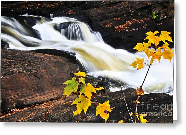 Flowing Greeting Cards - Forest river in the fall Greeting Card by Elena Elisseeva