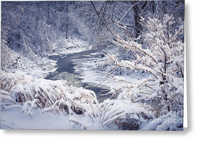 Snowstorm Greeting Cards - Forest river in winter snow Greeting Card by Elena Elisseeva