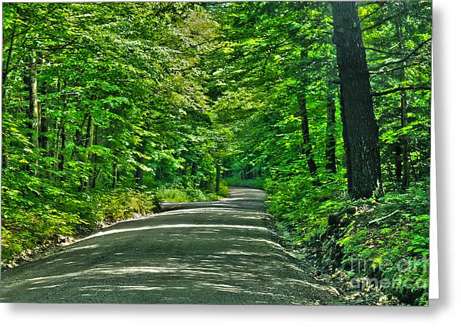 Scenic Drive Greeting Cards - Forest road Greeting Card by Claudia Mottram