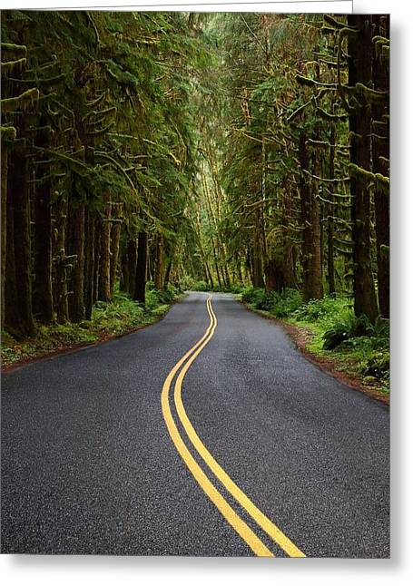 Moss Green Greeting Cards - Forest Road Greeting Card by David Andersen