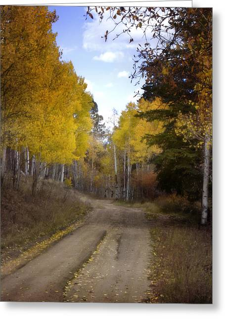 Nature Scene Greeting Cards - Forest Road in Autumn Greeting Card by Ellen Heaverlo
