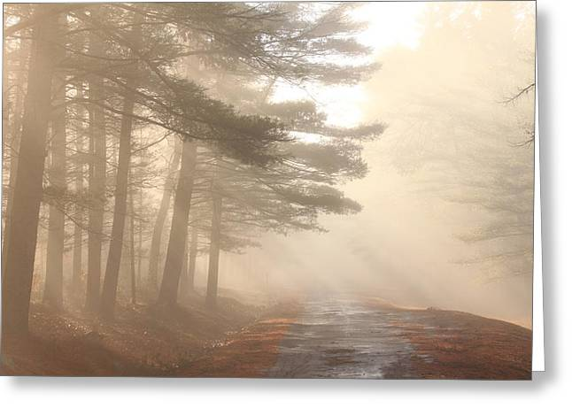 Forest Road Morning Fog Greeting Card by John Burk