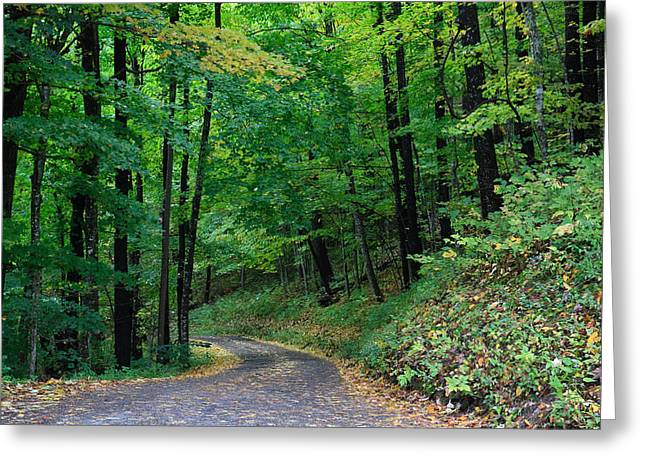 Roaring Fork Road Photographs Greeting Cards - Forest Road Greeting Card by Paul Moore
