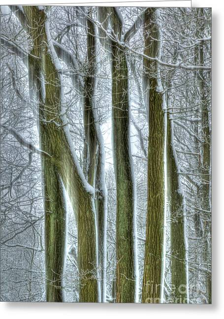 Forest Sentinels Greeting Card by David Birchall