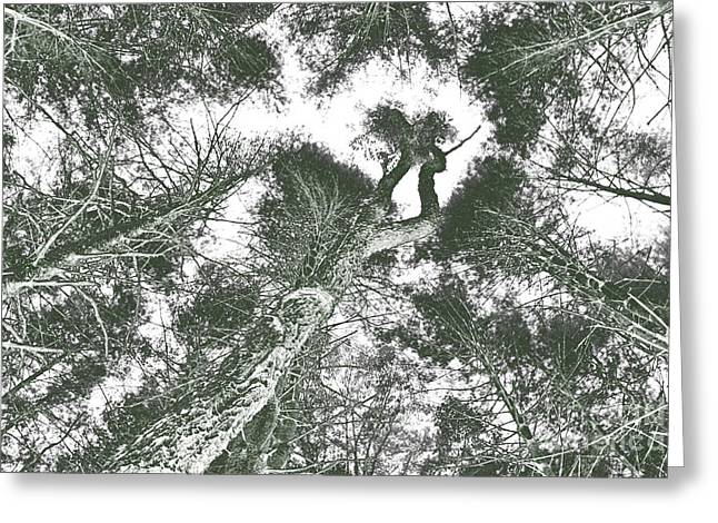 Abstract Digital Greeting Cards - Forest Skyward Greeting Card by Jonathan Welch