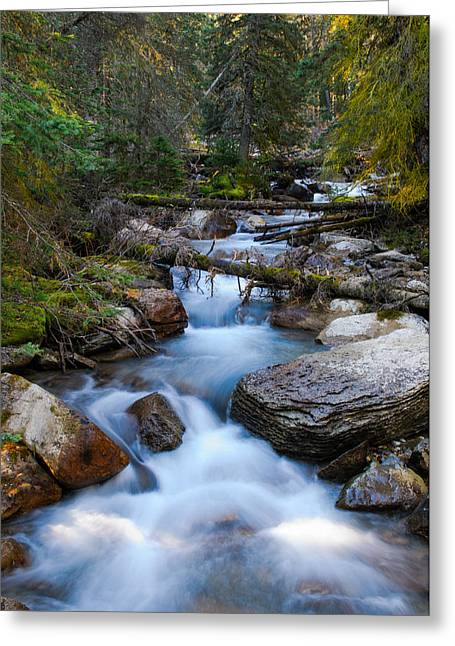 Brandon Smith Greeting Cards - Forest Stream Greeting Card by Brandon Smith
