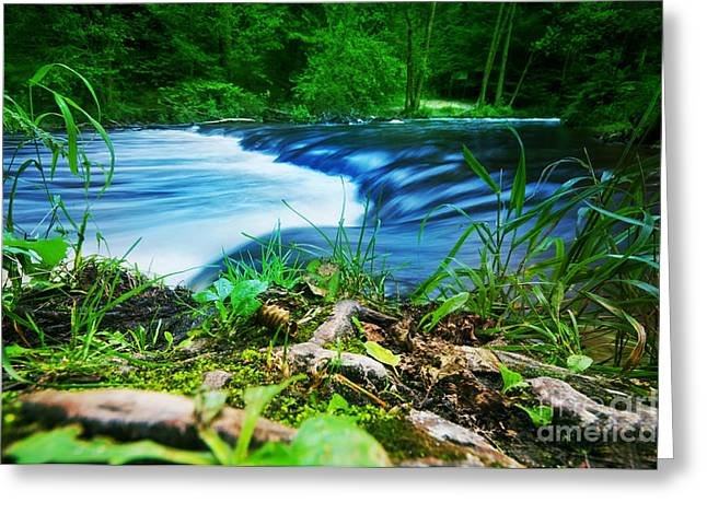 Fall River Scenes Greeting Cards - Forest stream running fast Greeting Card by Michal Bednarek