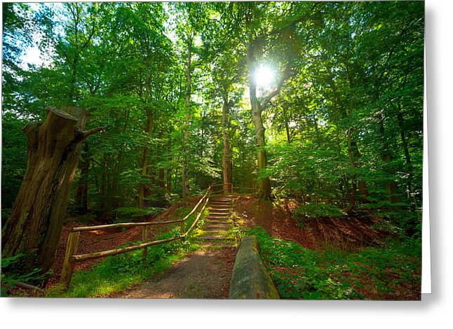 Alejandro Greeting Cards - Forest Sun Greeting Card by Alejandro Quezada