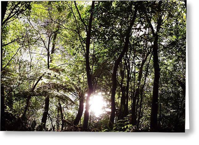Forest Photographs Greeting Cards - Forest sun Greeting Card by Les Cunliffe