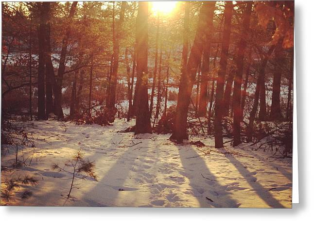New England Snow Scene Greeting Cards - Forest Sunburst Greeting Card by Barbara Peacock