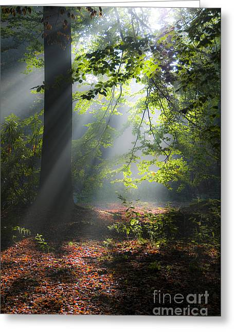 Mill In Woods Photographs Greeting Cards - Forest Sunlight Greeting Card by Christopher Mills