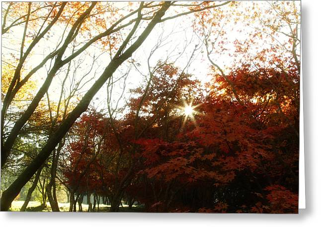 Autumn Photographs Greeting Cards - Forest sunlight Greeting Card by Les Cunliffe