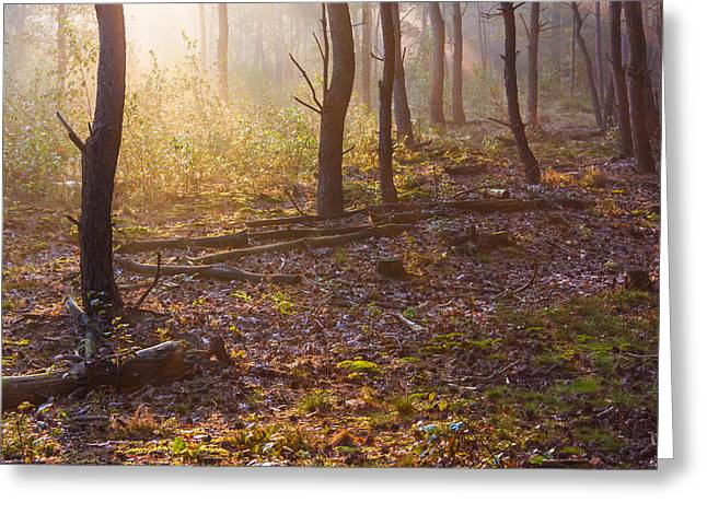 Esque Greeting Cards - Forest Sunlight Greeting Card by Semmick Photo