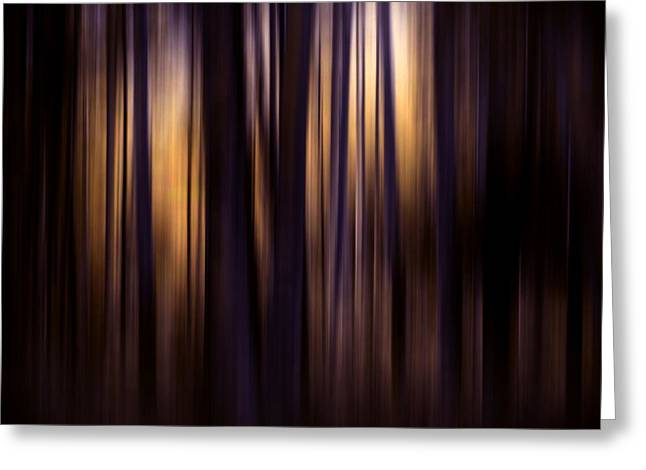 Forest Photographs Greeting Cards - Forest Surround Greeting Card by Sharon Mau