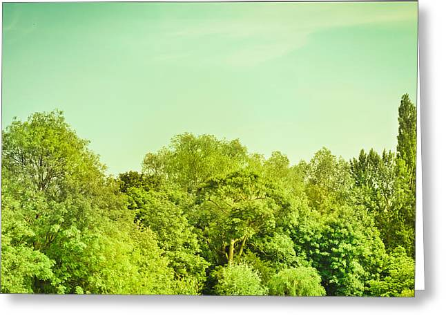 Nature Scene Greeting Cards - Forest Greeting Card by Tom Gowanlock