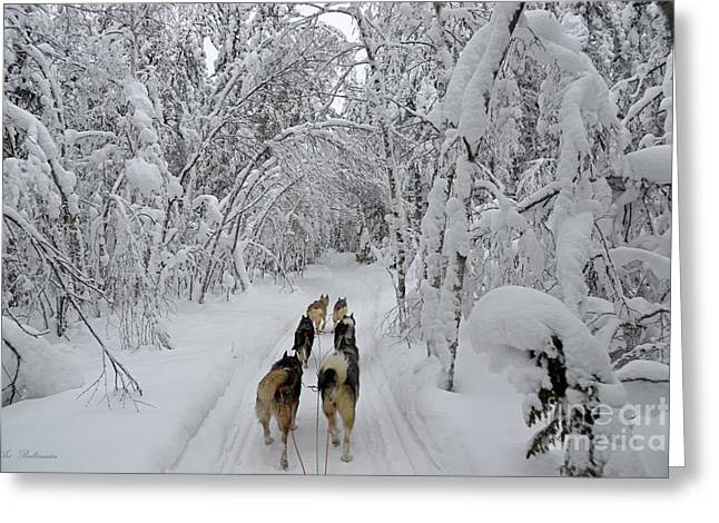Husky Greeting Cards - Forest Tour Greeting Card by Arik Baltinester