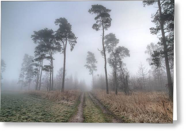 Natural Realm Greeting Cards - Forest Track In Mist Greeting Card by EXparte SE