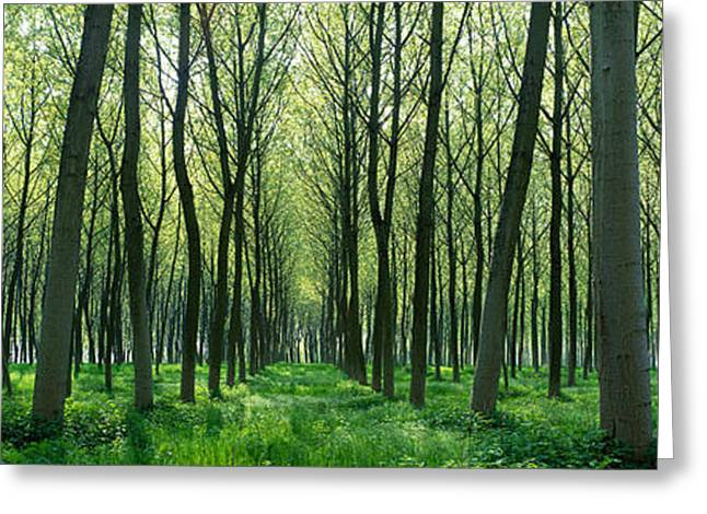 Chateau Greeting Cards - Forest Trail Chateau-thierry France Greeting Card by Panoramic Images