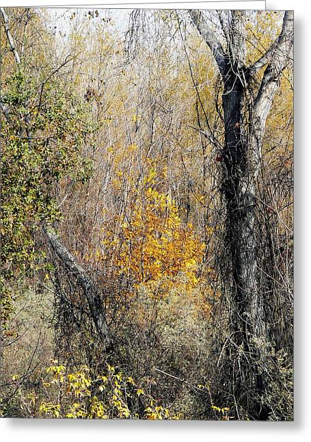 Colusa Greeting Cards - Forest Trees in Winter  Greeting Card by Pamela Patch