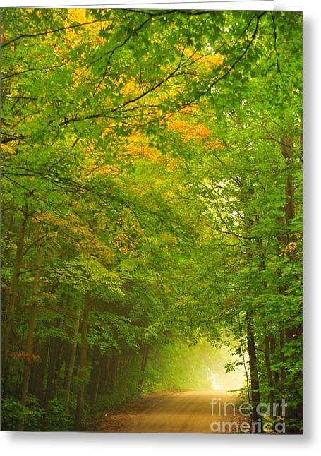 Fall Trees Greeting Cards - Forest Tunnel Greeting Card by Terri Gostola