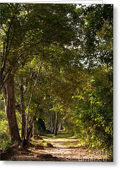 Walk Paths Greeting Cards - Forest Walk 01 Greeting Card by Rick Piper Photography