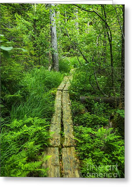 Path Greeting Cards - Forest Walk Greeting Card by Diane Diederich