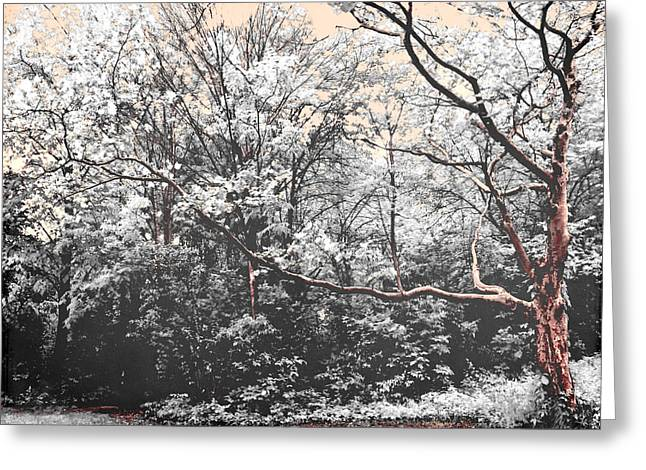 Snow-covered Landscape Greeting Cards - Forest Whispers Greeting Card by Shawna  Rowe