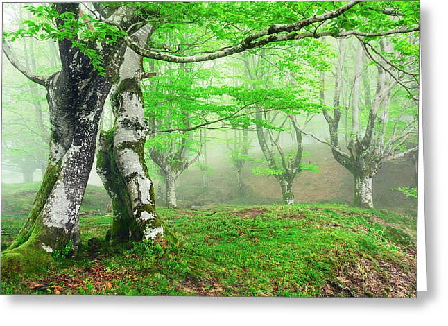 Fantasy Bark Greeting Cards - Forest With Fog In Spring Greeting Card by Mikel Martinez de Osaba