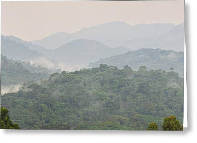 Uganda Greeting Cards - Forest With Mountain Range, Bwindi Greeting Card by Panoramic Images