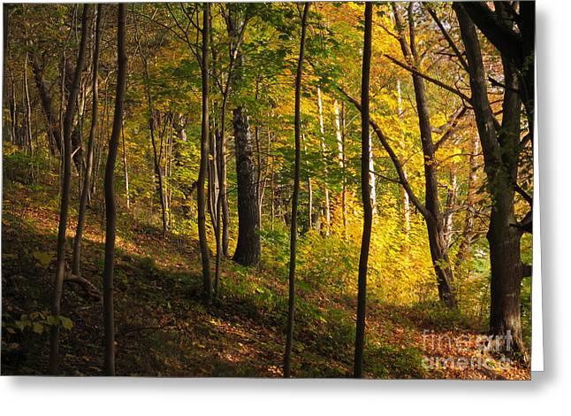 Autumn Art Greeting Cards - Forestlight Greeting Card by Lutz Baar