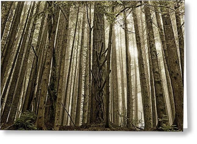 Northern California Landscapes Greeting Cards - Forests of Northern California Greeting Card by Mountain Dreams