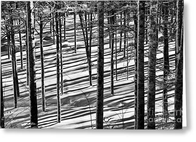 Winter White Fine Art Snow And Trees Greeting Cards - Forests shadows Greeting Card by Yuri Santin