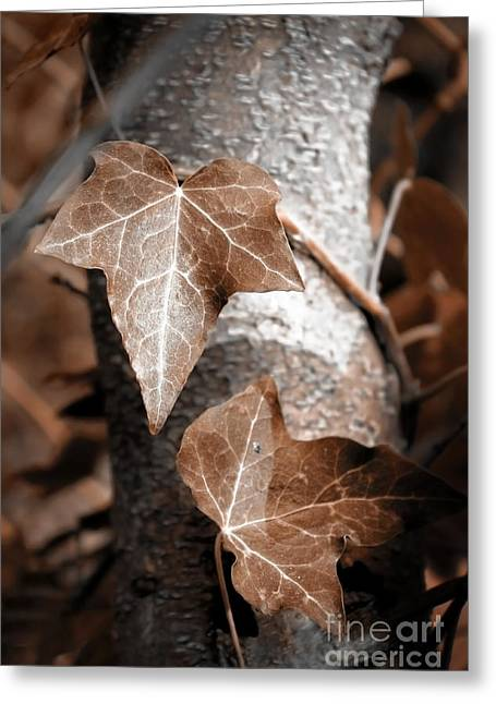 Forever Entwined Greeting Card by Ellen Cotton