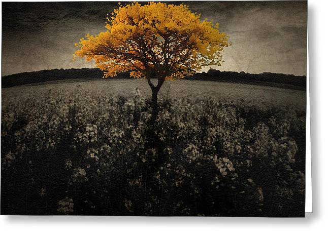Epic Amazing Colors Landscape Digital Modern Still Life Trees Warm Natural Greeting Cards - Forever You Greeting Card by Brett Pfister