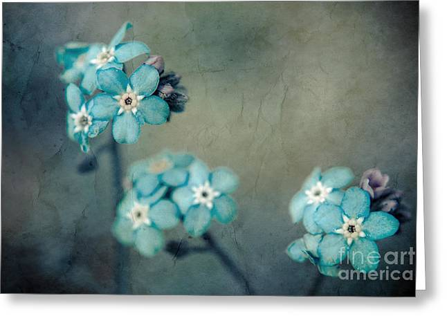 """forget Me Not"" Greeting Cards - Forget Me Not 01 - s22dt06 Greeting Card by Variance Collections"