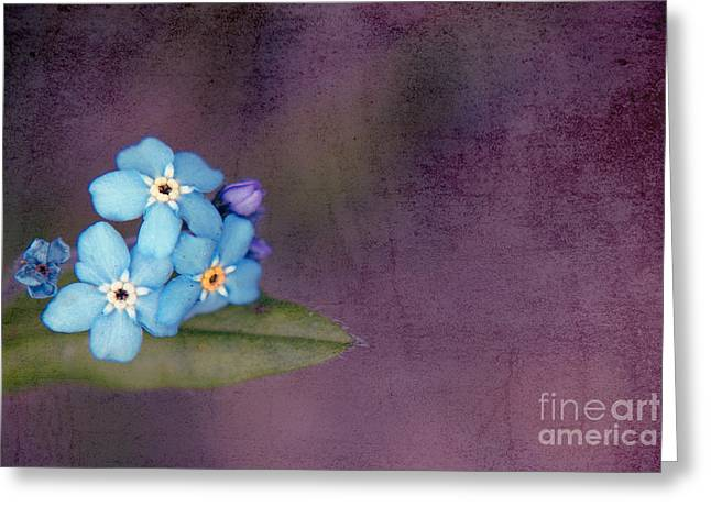 """forget Me Not"" Greeting Cards - Forget Me Not 02 - s0304bt02b Greeting Card by Variance Collections"