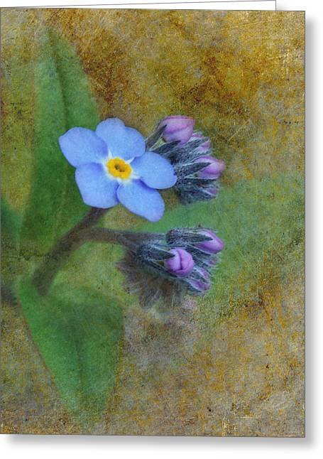 """forget Me Not Flowers"" Greeting Cards - Forget Me Not Greeting Card by Angie Vogel"