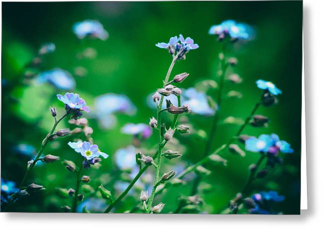Forgotten Greeting Cards - Forget Me Not Greeting Card by Pixabay