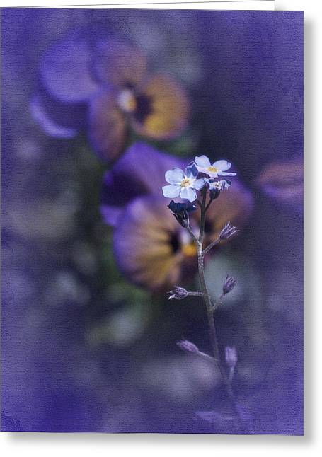 Forgotten Greeting Cards - Forget Me Not Greeting Card by Richard Cummings