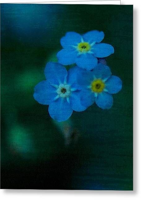 All Occasion Card  Greeting Cards - Forget Me Nots 3 Greeting Card by Simone Ochrym