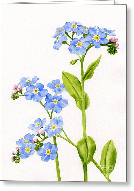 Forget-me-nots On White Greeting Card by Sharon Freeman