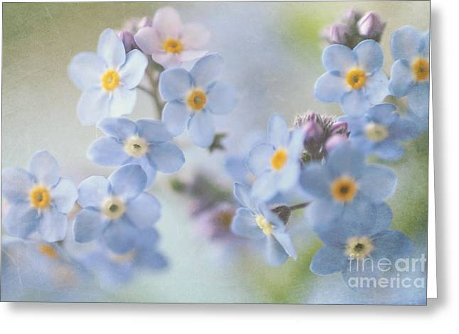Forgotten Greeting Cards - Forget Me Nots Greeting Card by Sylvia Cook