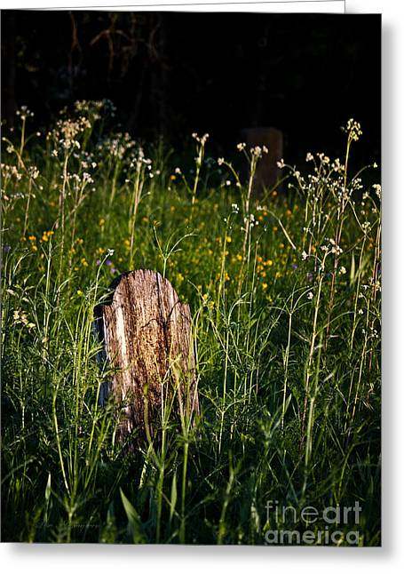 Headstones Greeting Cards - Forgotten Greeting Card by Lisa Holmgreen