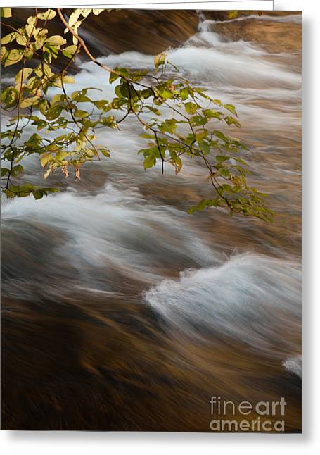 Beavers Bend Park Greeting Cards - Fork River Greeting Card by Iris Greenwell