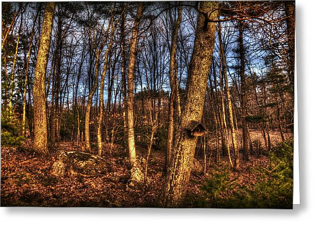 Hdr Landscape Greeting Cards - Forrest 2 Greeting Card by Craig Incardone
