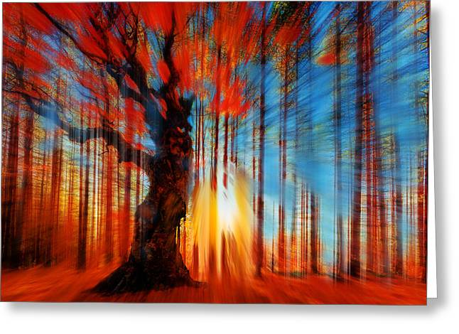 Dappled Light Greeting Cards - Forrest And Light Greeting Card by Tony Rubino